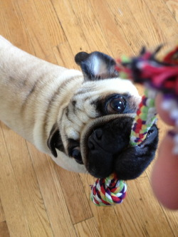 moosepug:  MY ROPE