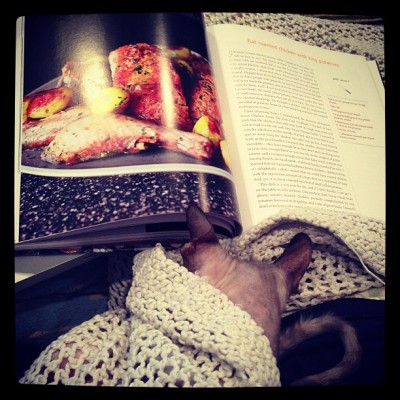 Rain and blankets and cookbooks and kitty snuggles #perfectday