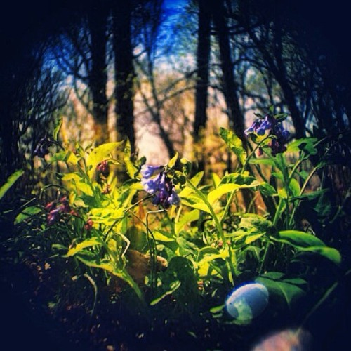 #flowers #spring #nature #earth #sun #leaves #philly #philadelphia #park  (at Fairmount Park)