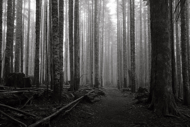(via Silence, Larch Mountain | Flickr - Photo Sharing!)