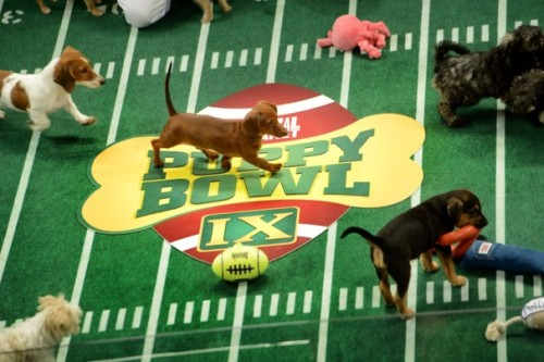 npr:  (via The Puppy Bowl: Behind the scenes of TV's cutest show) This year will feature — for the first time ever — hedgehog cheerleaders! -heidi