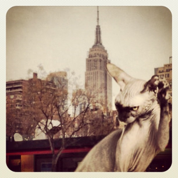 #cats #nyc #creepy