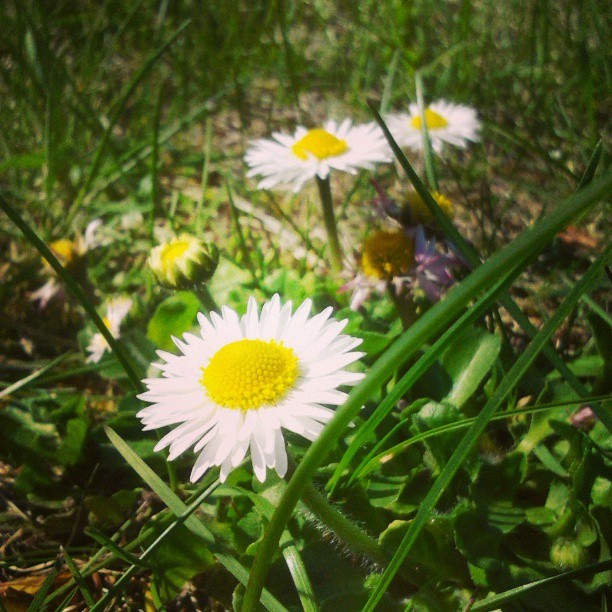 #spring #flower #grass #green #nature #instaphoto #instagood #photooftheday