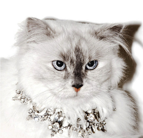 Cats Model In New Juicy Couture Ads see the gallery here <3!!!