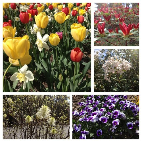Celebrated Earth Day a day early at the Biltmore gardens yesterday! So much beauty. #latergram #nofilters