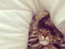 cat love cute life beautiful sleep dream cats cutie smile meow roar rosy