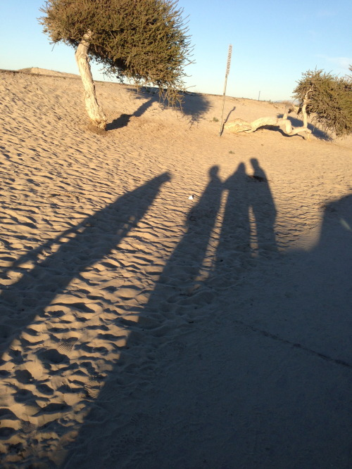 long shadows at san diego sunset