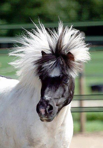 I guess everyone has a bad hair day once in awhile.