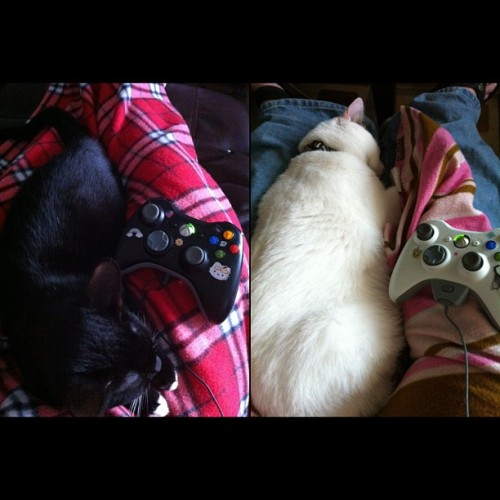 My black & white #Xbox360 kitties! #InstaSize