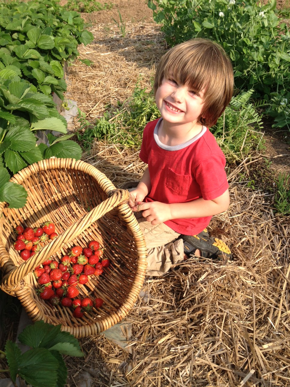 Noah's been growing strawberries for my mom. I showed her this picture today. It made her smile