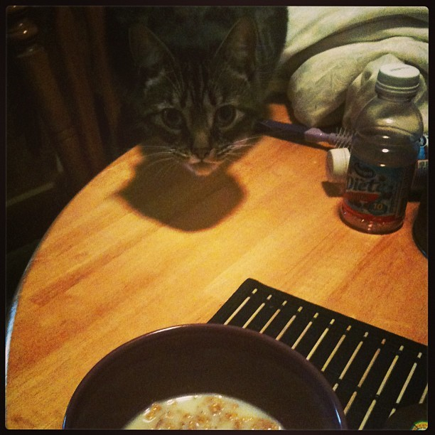 He literally stares at me and meows until I finish my cereal and let him have the leftover milk #cat
