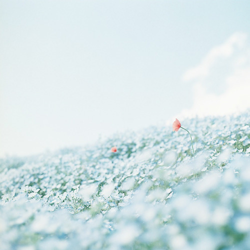 ileftmyheartintokyo:  untitled by shabon* on Flickr.