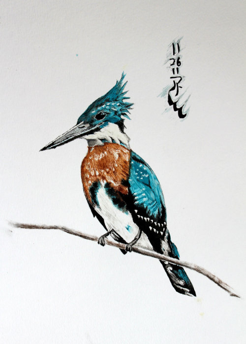 Kingfisher by Boio8010
