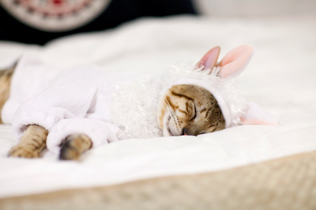Easter is so exhausting… Photo by Color me Katie