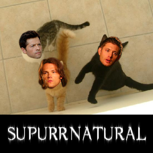 necroblade:  This week on SU-PURR-NATURAL… Starring Jared Cat-alecki Jensen Hackles Misha Paw-lins