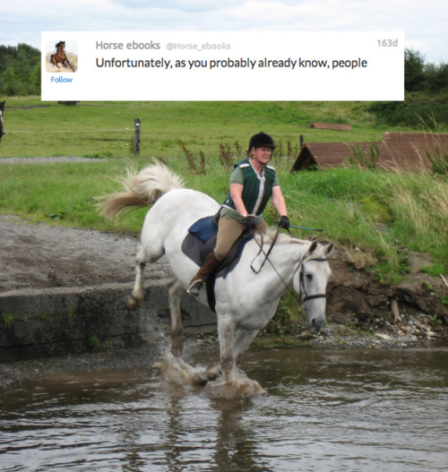 @Horse_ebooks, As Told By Actual Horses