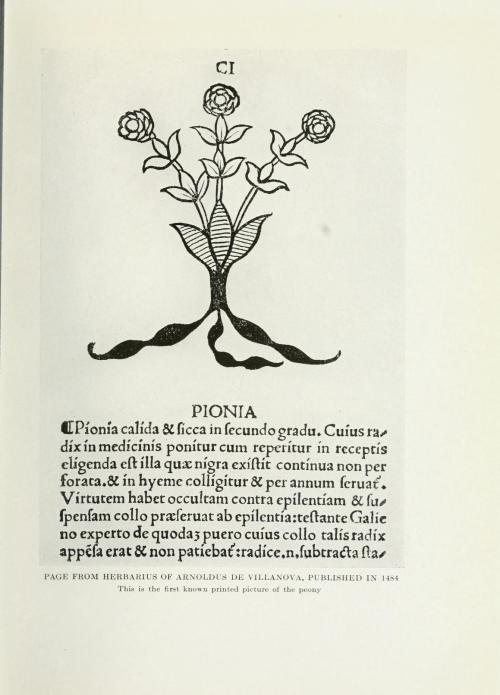 Published in 1484, Herbarius of Arnoldus de Villanova, this is the first known printed picture of a Peony.  Reprinted in The Book of the Peony (1917), by Mrs. Edward Harding.