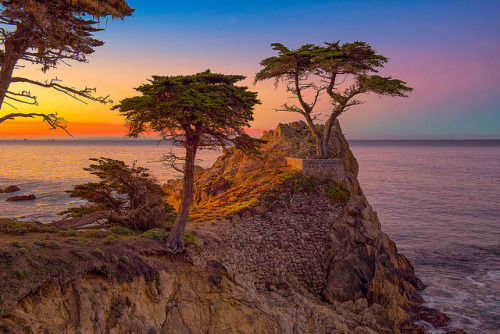 neptunesbounty:  Lone Cypress Tree by mojo2u on Flickr.