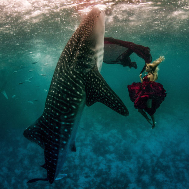 Underwater model Hannah Fraser swims with a whale shark in Oslob, Philippines, for a one-of-a-kind photo-session. The stunt was the brainchild of US photographers Shawn Heinrichs and Kristian Schmidt. Picture: Kristian Schmidt / Barcroft Media