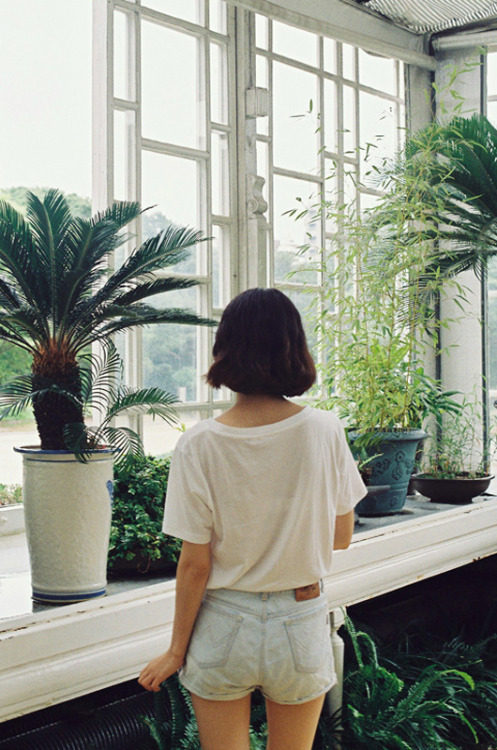 love the windows, love the plants