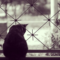 The cat & the window.