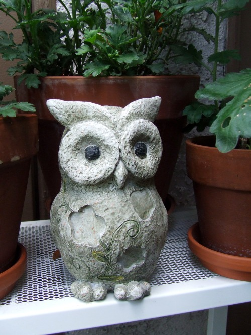 Rauru Pigwidgeon The owl I bought from Ross to keep Godric, the Gargoyle, some company. Only 2$. Not bad, eh? The owl from The Legend of Zelda, Kaepora Gaebora, is said to be a reincarnation of Rauru, the sage of the light temple. Pigwidgeon is the name of Ron Weasley's owl in the Harry Potter series.