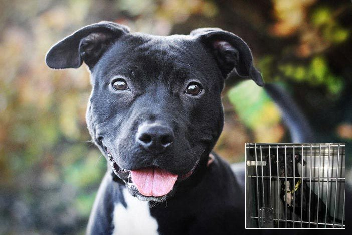 "punkrockmermaid:  PHOTOGRAPHER TOURS SHELTERS TO HELP DOGS GET ADOPTED - ""Our mission is to provide shelter staff and volunteers with the resources to successfully groom and photograph shelter pets, helping give them the second chance they deserve."" The One Picture Saves a Life initiative teaches animal shelters how to groom and photograph the shelter animals to present them in the best light (probably both literally and figuratively) for adoption. Photographer Seth Casteel is currently touring various shelters in the U.S. to put on workshops. You may be familiar with Casteel's Underwater Dogs series. The photos above are examples of how different the dogs look depending on how they are presented. In addition to Casteel, John Paul Pet, The Animal Rescue Site, GreaterGood.org, and the Petfinder Foundation are all partners in this endeavor. Click here to learn more about One Picture Saves a Life. You can also donate to this cause by clicking here. (Photos from One Picture Saves a Life)"