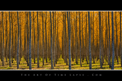 I did a time-lapse with these trees.  Here's a still frame from it.   CameraCanon EOS 5D Mark III Exposure 1.3 seconds Aperture f/22 Focal Length 70 mm ISO Speed 100  #time-lapse #oregon #johneklund #theartoftimelapse