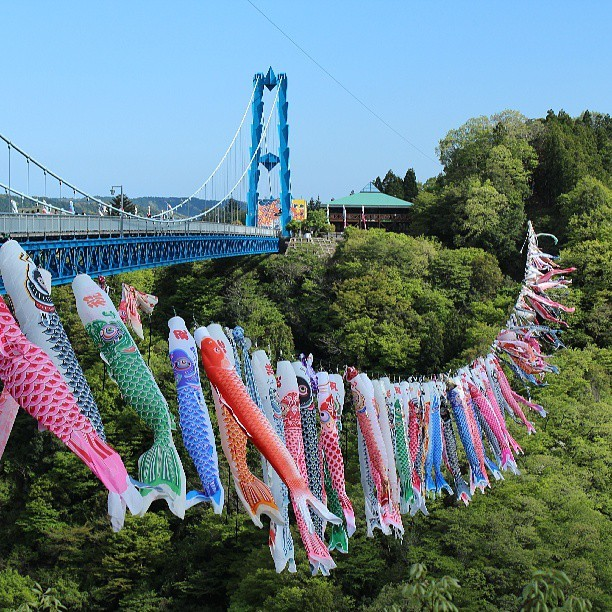 Found! Hashtag 鯉のぼり Yesterday, 5th of May, Japan celebrated Children's Day or Kodomo no Hi. It's a day when they celebrate the happiness of children and express gratitude to mothers. As early as April, people put up Koinobori or carp-shaped wind socks that are traditionally hung on a pole, making the carps appear like they're swimming. Visit the hashtag page, and you'll see how else the Japanese can get creative when celebrating this special holiday.