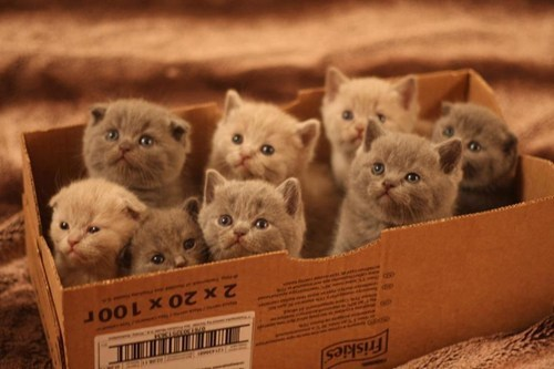 Feeling Down? Here's a Box Full of Kittens! - Cheezburger