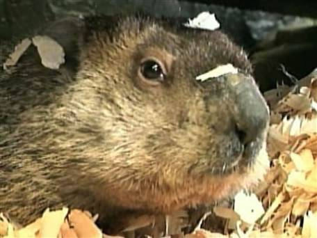 Prosecutor drops plan to execute Punxsutawney Phil  (Photo: NBC News)  Punxsutawney Phil is innocent beyond a shadow of a doubt. That is the legal opinion of an Ohio prosecutor who on Tuesday abandoned his plan to seek the death penalty against the furry forecaster for blowing it by calling for an early spring. Read the complete story.