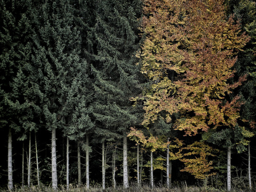 Trees by Joerg Marx on Flickr.
