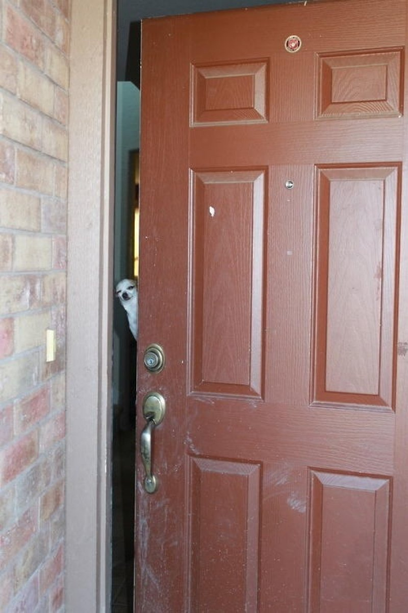 collegehumor:  Weird Dog Opens the Door Master is not home. Can I take a weird message? -