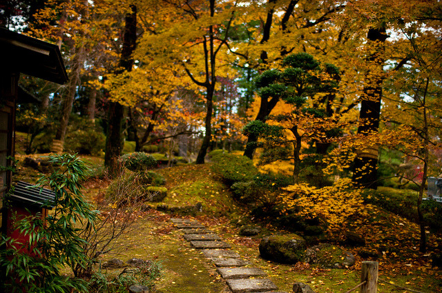 dreams-of-japan:  秋 Autumn Otoño by CaDs on Flickr.  One tail