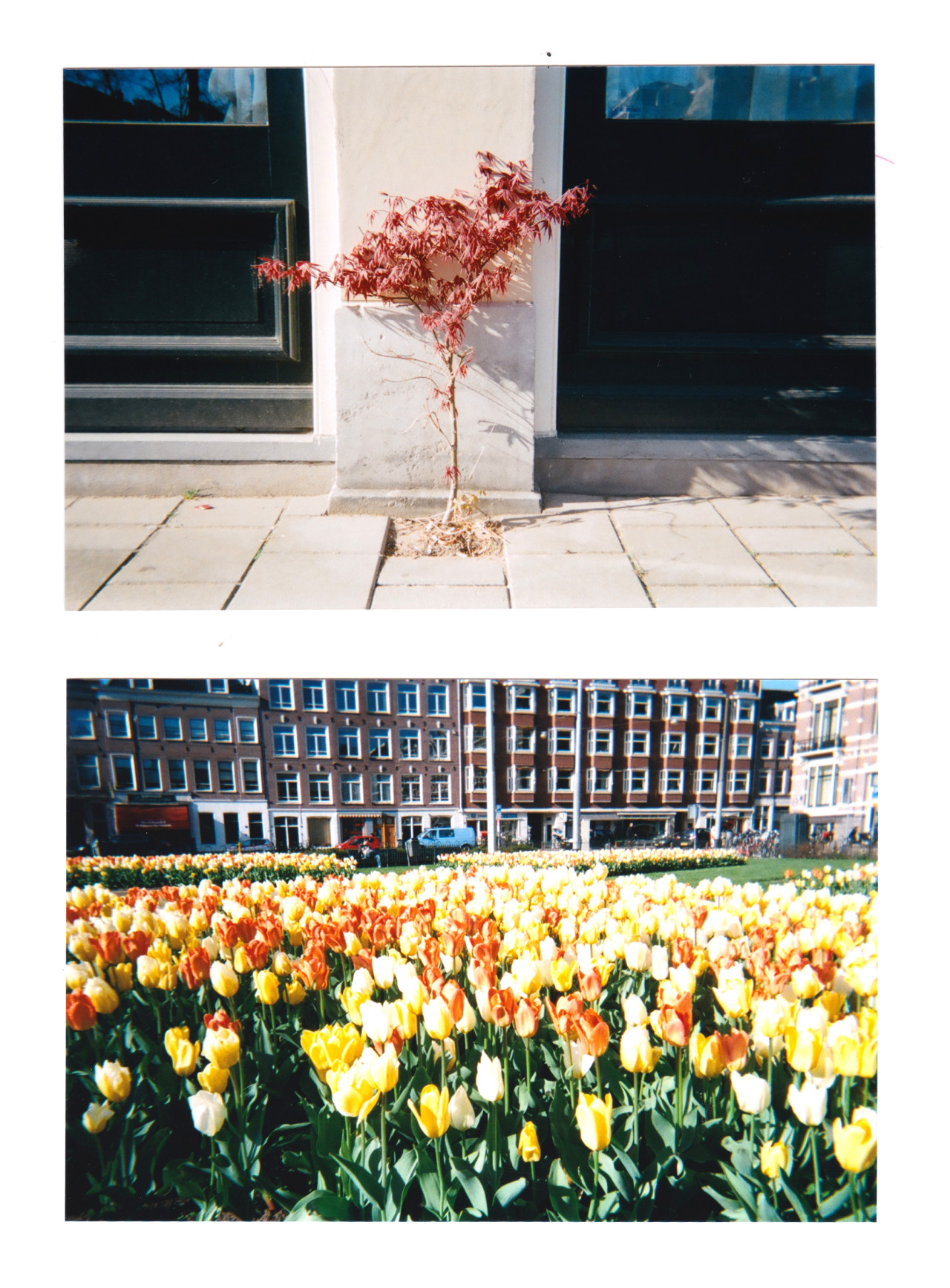 Selected photographs from Holland's Queensday 2013