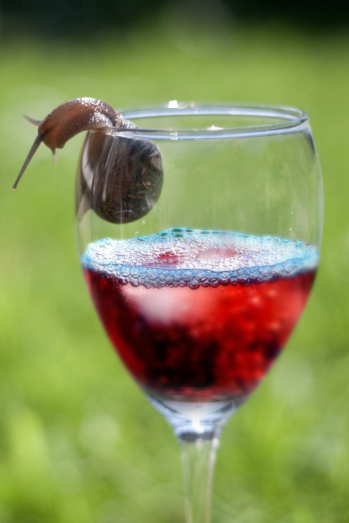 magicalnaturetour:  snail & wine | shell-ebrations ? - explored by Adam Foster | Codefor on Flickr.