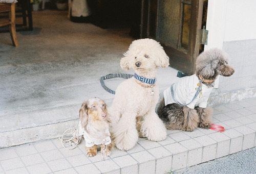 resisted:  pretty three dogs by **mog** on Flickr.