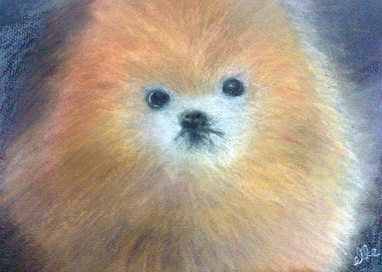 pikachuu89:  Portrait of tommypom