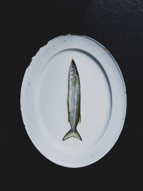 toby-scott:  Garfish