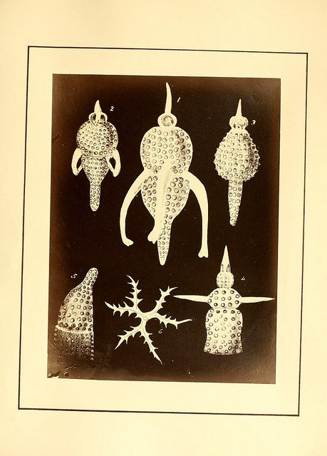 Polycystins, figures of remarkable forms &c. in the Barbados chalk deposit (chiefly collected by Dr. Davy, and noticed in a lecture delivered to the Agricultural Society of Barbados, in July, 1846) by BioDivLibrary on Flickr. London :W. Wheldon,[ca. 1869].biodiversitylibrary.org/page/9995975