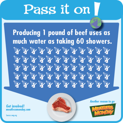 meatlessmonday:  Monday is Earth Day. Do you know how much water goes into producing just ONE pound of beef?