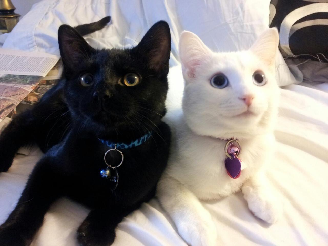 catsbeaversandducks:  Shadow and Mischief Photo by ©Mischief