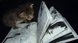 bookwormanimals:  Reading (by sachiko-hime)
