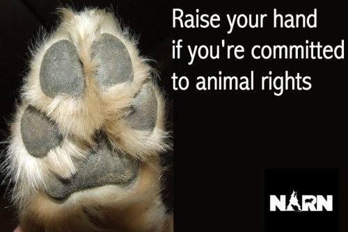 raincityvegan:  Northwest Animal Rights Network http://www.narn.org/