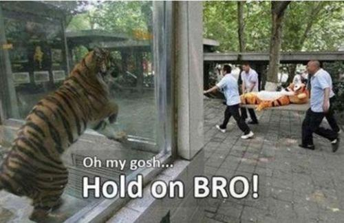 epicmeme:  Hold on Bro!!