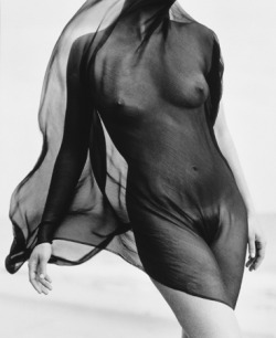 Herb Ritts. Female Torso with Veil, Paradise Cove, 1984.
