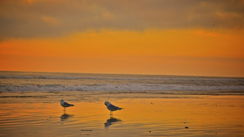 Two Gulls on the Beach in Carlsbad California.