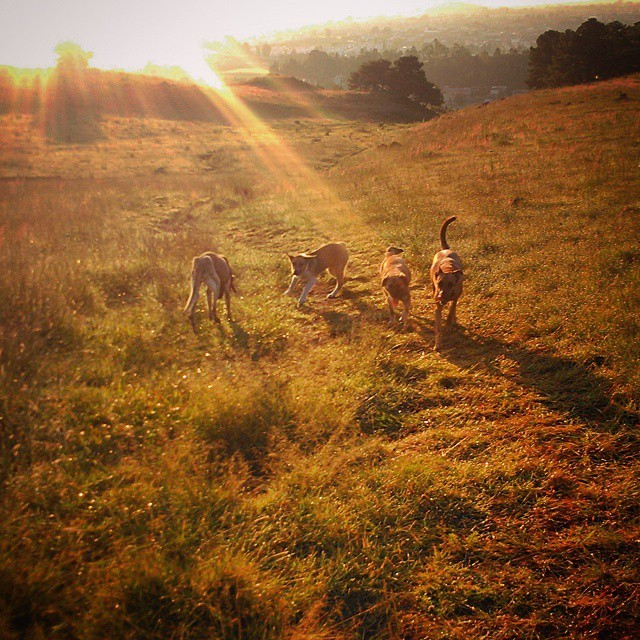 Cuatricromía matutina. #amanecer #buenosdias #zapotecas #Sam #Miel #Tacuba #Gallogas  (en Cerro Zapotecas)