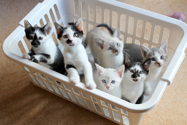 Basket full of Karma. Photo via cybergata