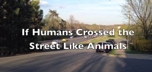 IF HUMANS CROSSED THE STREET LIKE ANIMALSby Blaire Bercy http://bit.ly/1154xjg